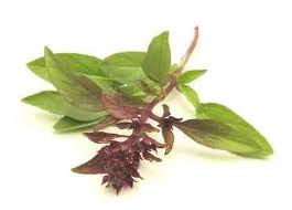 Basil Licorice