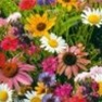 Wildflower Cutflower Mix
